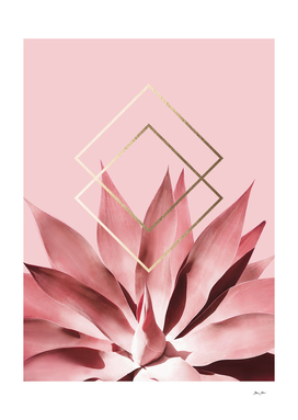 Solar Blush Agave with Geometry