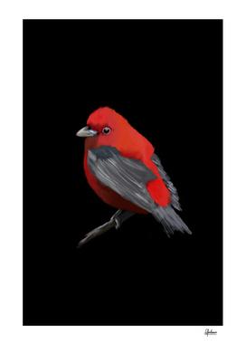 Red Bird Digital Painting
