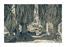 Palms  Oasis in Sepia