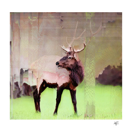 One Stag