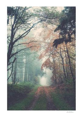 Autumn vibes...