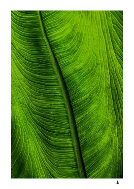 green leaf plant freshness color