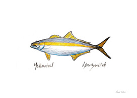 Yellowtail Fish Drawing