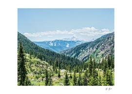 Dense Forest Landscape With Ski Resort Runs