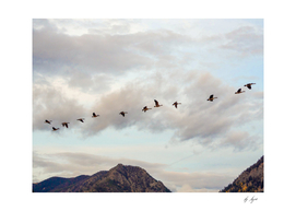 Migrating Birds Nature Photography