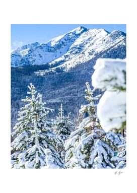 Blue Snow Cap Mountain Looking through the Trees