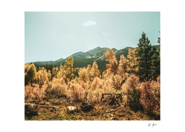 Golden Leaves in the High Forest with Beautiful Landscape