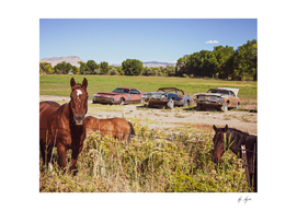 Three Rusty Cars and Horses on a Country Farm