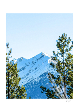 Alpine Adventure Photograph through the Trees