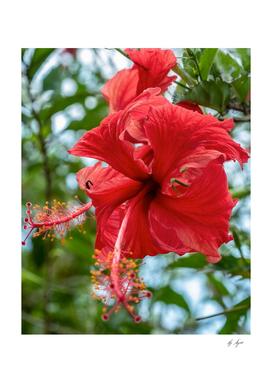 Red Flower Bloom Macros High Resolution
