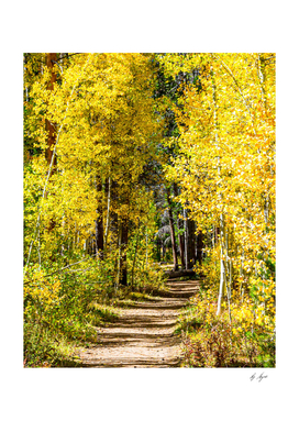 Yellow Tree Road // Hiking in Autumn