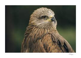 Power Bird II