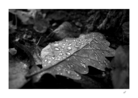 Dew Drops on Autumn Leaves