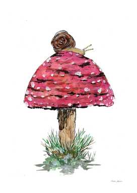 Fly Agaric Toadstool and Snail