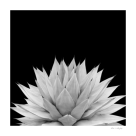 Agave Black & White Summer Night Vibes #1 #tropical #decor