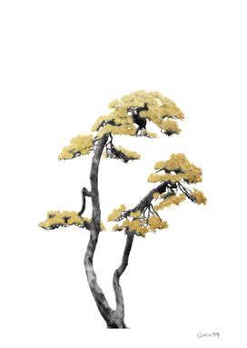 Bonsai Tree 06