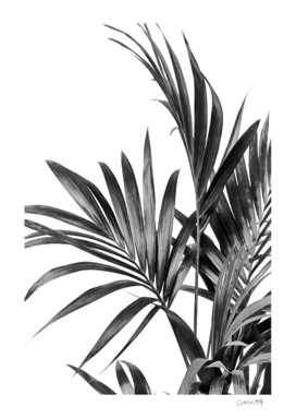 Palm Leaves Black and White 01