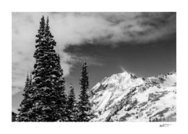 Trees Taller than the Highest Peak