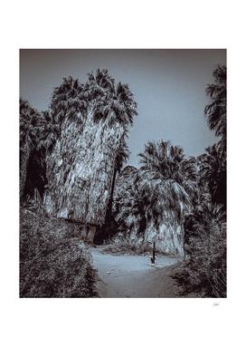 Anciet Palms