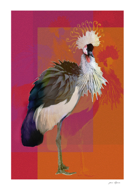 Crowned Crane with a lush plume