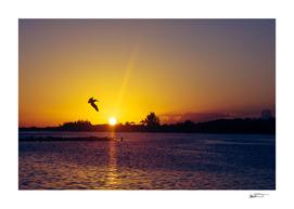 Tropical Pelican Sunset
