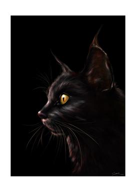 Black Cat V2