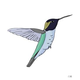 Hummingbird bird.