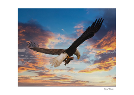 Eagle on Dramatic Sky