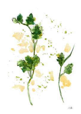 Watercolor parsley