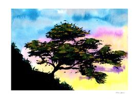 Summer Tree Hill