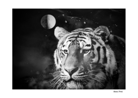 Tiger from the univers black