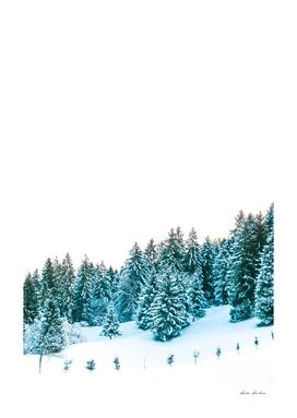 Snowy Winter Forest Scenery