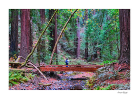 Hiker in Redwood Forest
