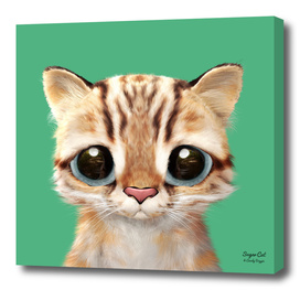 Leo the Leopard cat