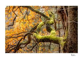 Reaching Autumn Branch