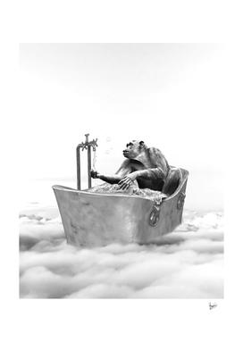 CHIMPANZEE BATH GLORIA SANCHEZ