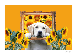 golden_retriver_frame_sunflowers