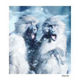 Blue Monkeys and Snow