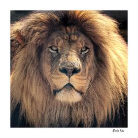 Face of Lion