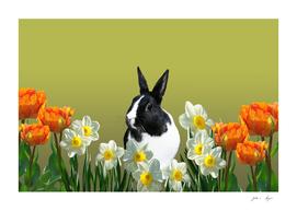 tulpis_rabbit_sw_flowers