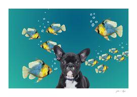 French Bulldog Tropical Fishes