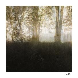 Autumnal Mallaise
