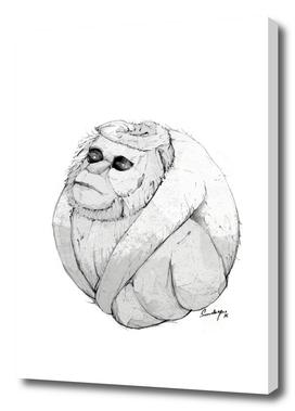Cocomonkey