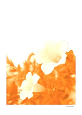 Retro petunia flowers in orange