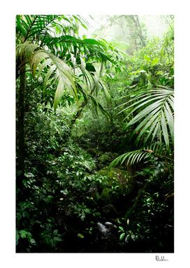 Misty Rainforest Creek