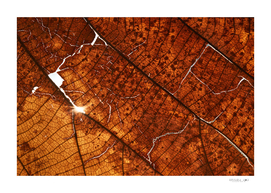 Cracked dry leaf