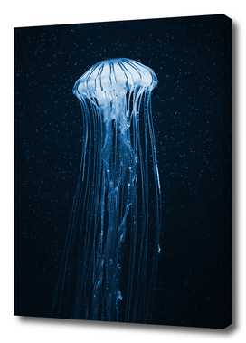 Night jellyfish