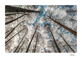 Low Angle Big Trees, West Lake, Hangzhou, China