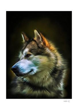 Alaskan Malamute - Dog Portrait