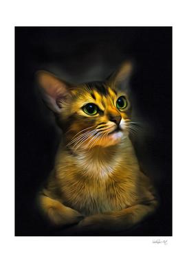 Abyssinian Curl Cat Portrait